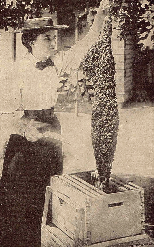 old fashioned urban beekeeping woman 1883
