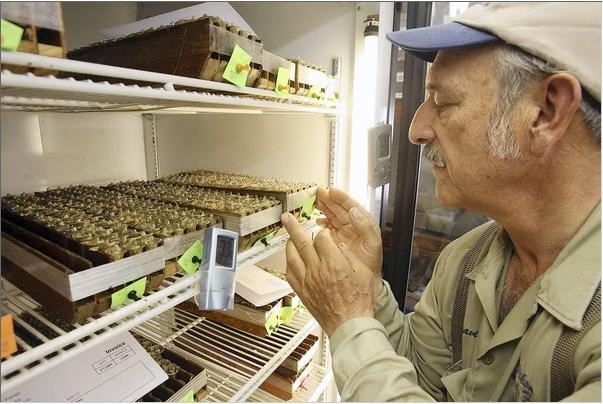 David Miksa queen cells beekeeping