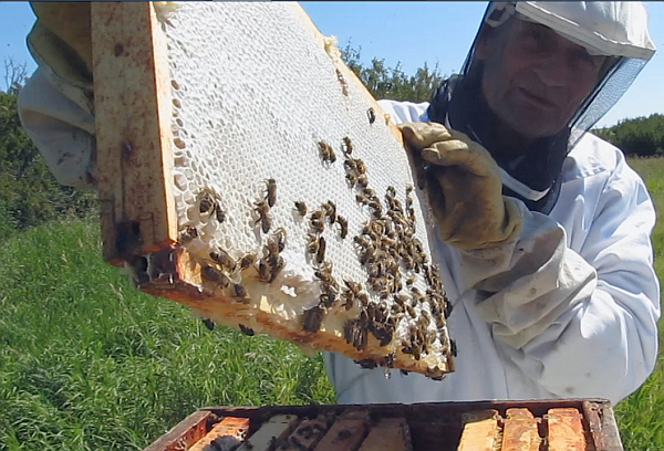 hive honey  beekeeping