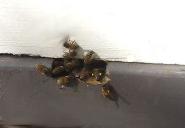pollen October honey bees